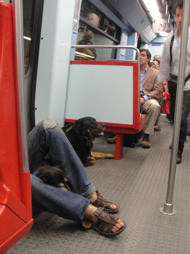 10 Metrô cachorro Lisboa