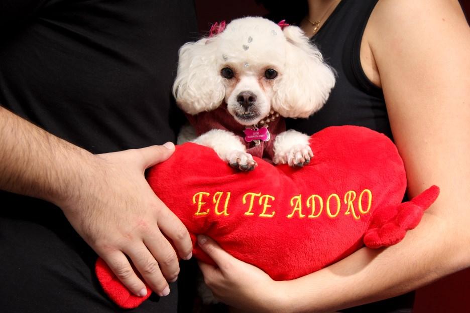 Ensaio Fotográfico Cachorro (17)