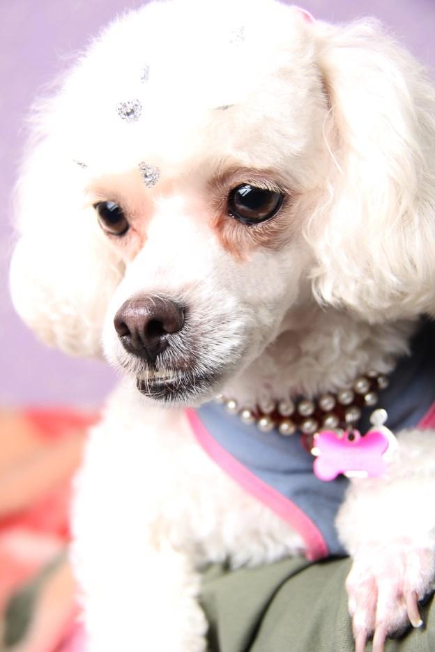 Ensaio Fotográfico Cachorro (2)