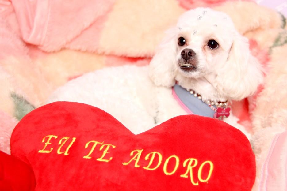 Ensaio Fotográfico Cachorro (3)