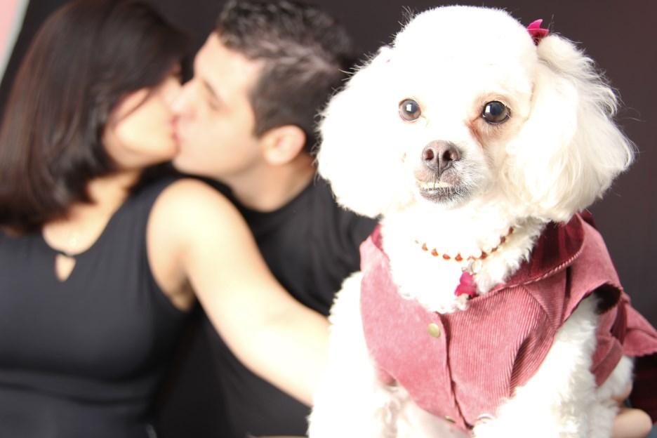 Ensaio Fotográfico Cachorro (9)
