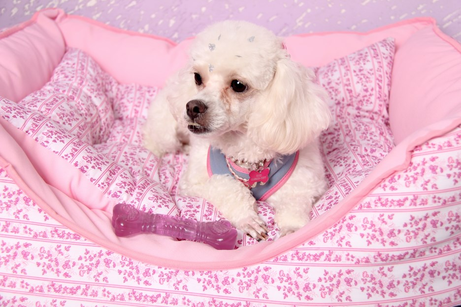 Ensaio Fotográfico Cachorro