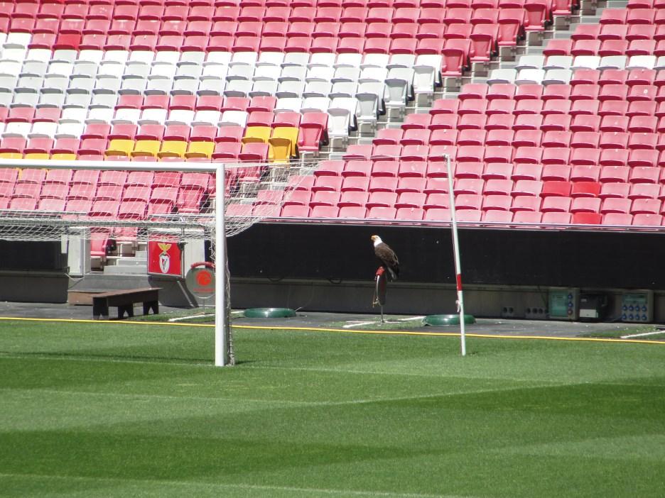 Estádio Benfica (4)