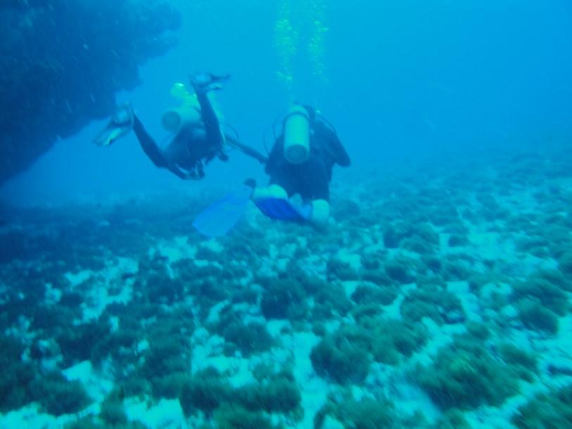 34 mergulho fernando de noronha (3)