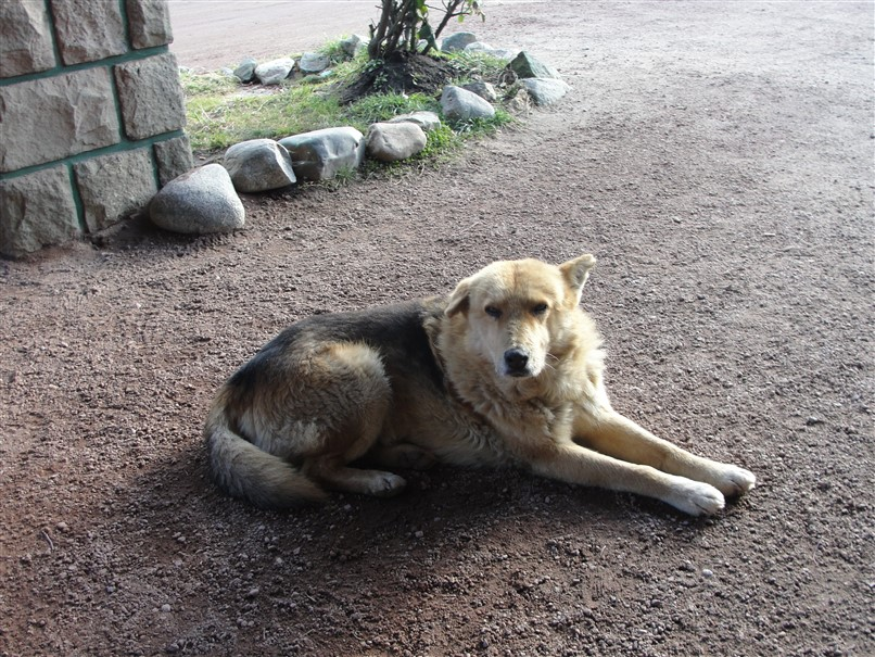 20 Cachorros Bariloche