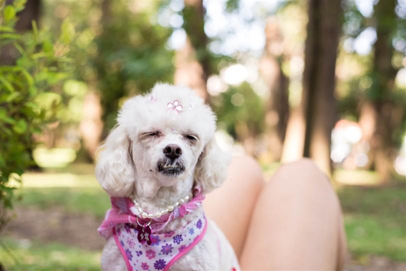Fotógrafo de Cães - Ensaio Susinha (12)