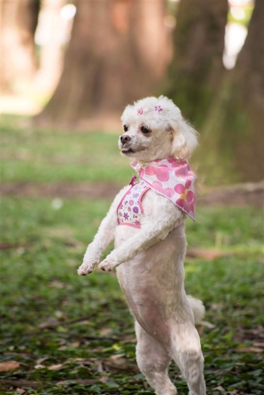 Fotógrafo de Cães - Ensaio Susinha (13)