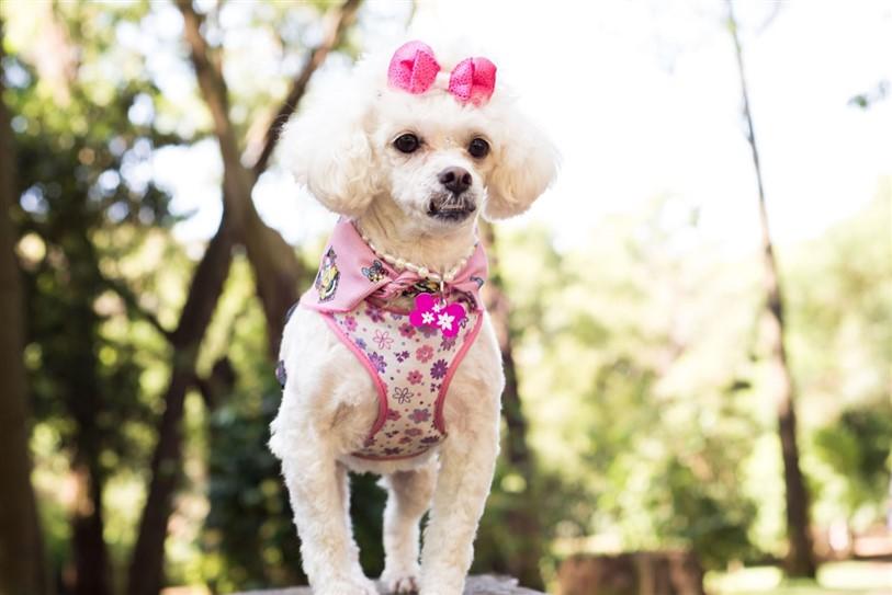 Fotógrafo de Cães - Ensaio Susinha (2)