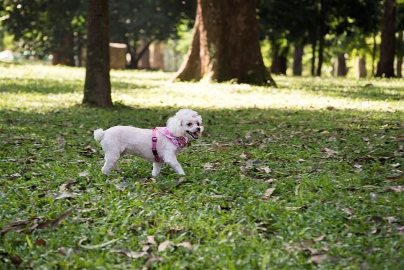 Fotógrafo de Cães - Ensaio Susinha (3)