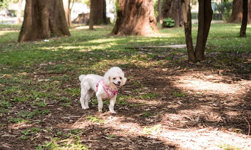 Fotógrafo de Cães - Ensaio Susinha (8)